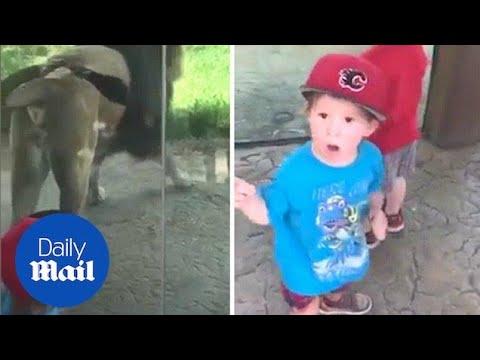 Лав одбележи територија пред малечко дете