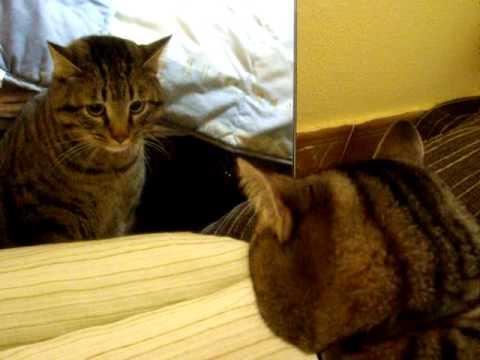Cat versus Mirror