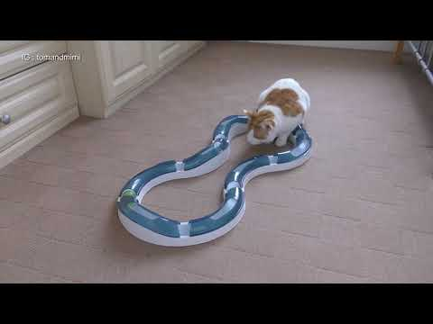 Cat Playing With Catit Senses Super Roller Circuit | 4K
