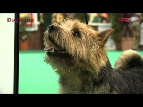 Birmingham National Dog Show 2016 - Terrier group Shortlist