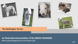 The Bedlington Terrier an illustrated interpretation of the Breed Standard by the MBTC with NBTC