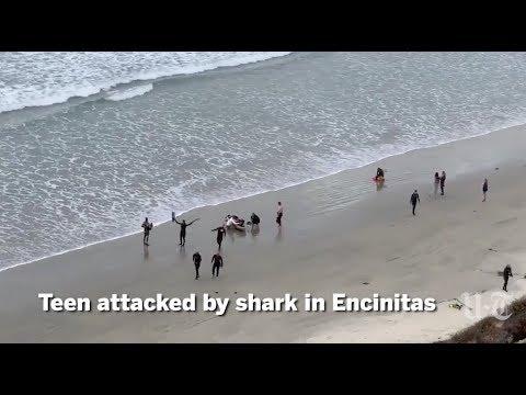 Shark Attacks Boy In Encinitas | San Diego Union-Tribune