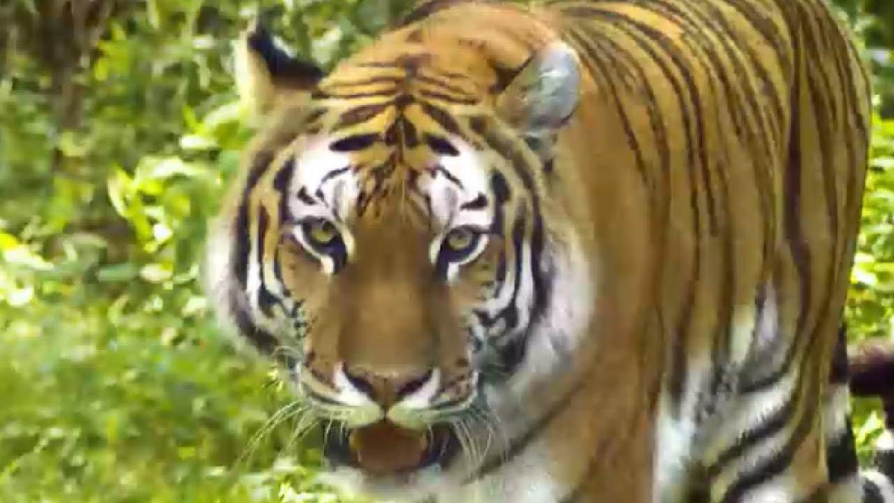 Jungle Animals 🐘🐯 - Learn Jungle Animals for Kids - YouTube