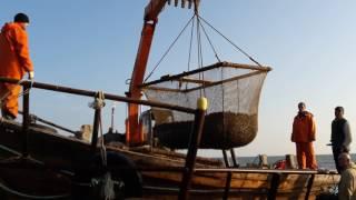 Рыбалка кукумария Сахалин