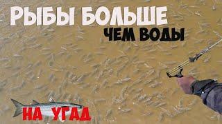 Вся рыба Тут Рыбалка с рогаткой