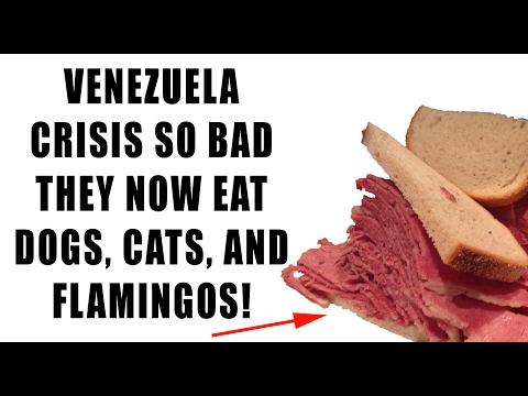 Venezuela Crisis So Bad They Eat Dog, Cat, Flamingo Amid MASSIVE FOOD SHORTAGE!