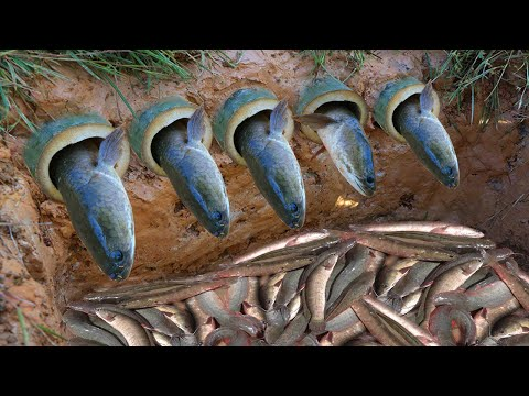Build Deep Hole Underground Fish Trap Make From 5 Bamboo Pipe