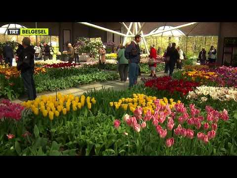 Hollanda'da Lale Mevsimi ve Tarihçesi