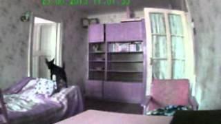 что делает собака сама дома(что делает собака сама дома., 2013-06-25T09:58:26.000Z)