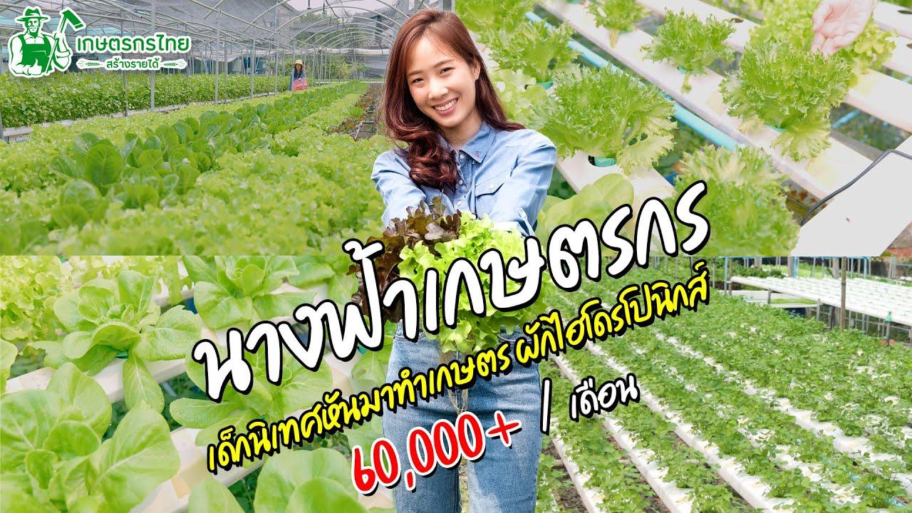 Ep31 ตอน นางฟ้าเกษตรกร เด็กนิเทศ ปลูกผักไฮโดรโปนิกส์ รายได้ 60000 ต่อเดือน