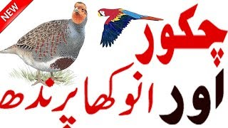 Facts About Bird | Bird Facts And Information | Rare Bird | Information About Bird | Hidden Secrets