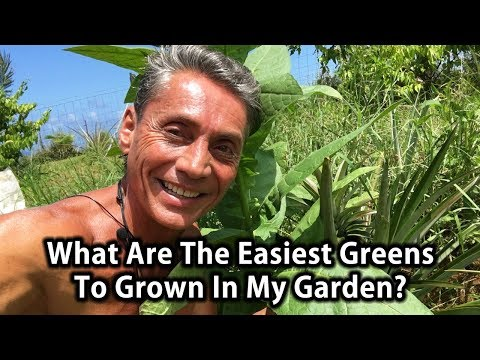 What Are The Easiest Greens To Grown In My Garden? | Tip Of The Day | Dr. Robert Cassar