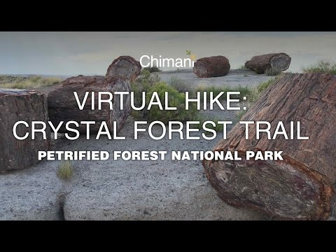 Virtual Hike: Crystal Forest Trail in Petrified Forest National Park, Arizona