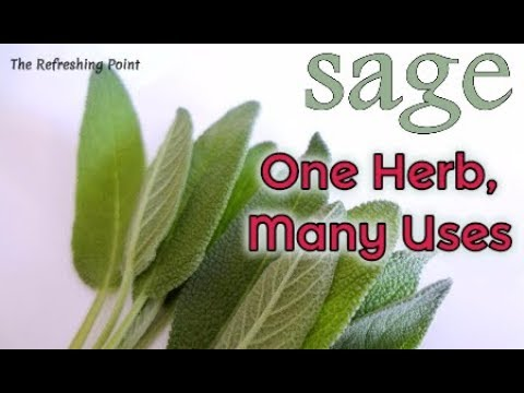 Sage the Immortality Plant Used to Treat Almost Every Illness-Sage Herb, Essential Oil &Tea Benefits
