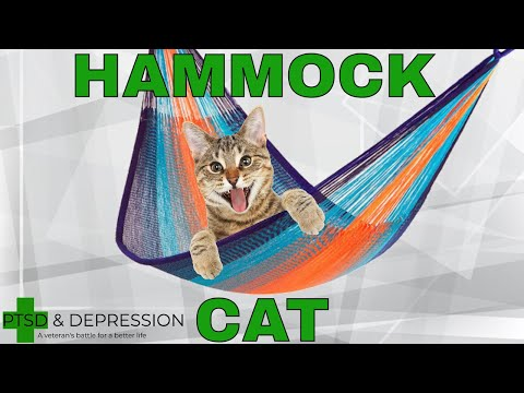 i'm-a-foster-cat-dad-and-my-bi-polar-foster-cat-loves-my-hammock-|-cats-are-good-for-depression