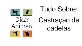 CASTRAÇÃO DE CADELAS (INDICAÇÕES, RISCOS, MITOS E VERDADES)