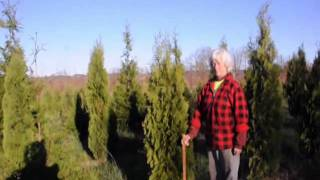 Job Opening      Nursery Sales Position at Our Tree Farm