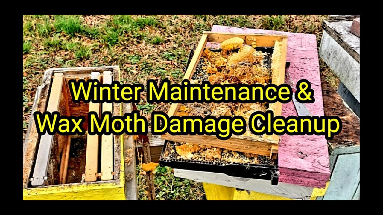 Winter Maintenance & Cleanup Of Wax Moth Damage