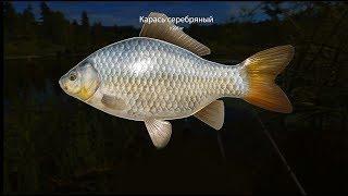 турнир с допами  Русская рыбалка 4