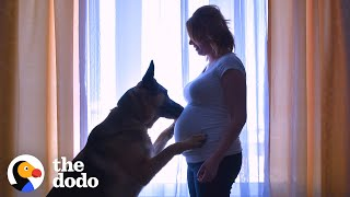 Dog Patiently Waits For His Baby Brother To Grow Up | The Dodo