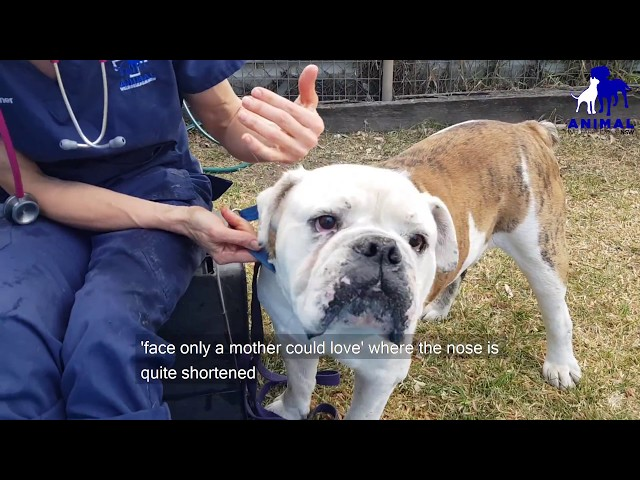 Animal Welfare League NSW - Animal Welfare - 1605 Elizabeth