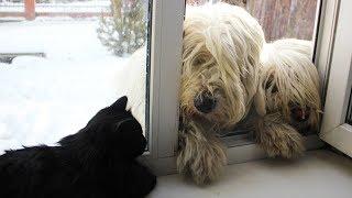 Ты любовь моя первая - Дружба собак и котов