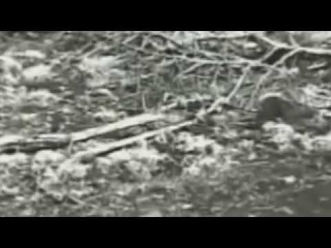 Top Secret UFO Research | Alien Military Project