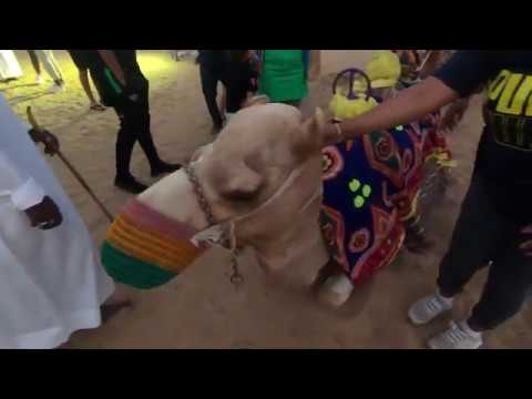 Camel Riding | Dubai Desert Safari tour | ABC Majilis camp | ABC Tours 2020 (Part 3).