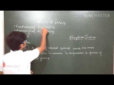 Taxonomic Categories: Species And Genus In Detail