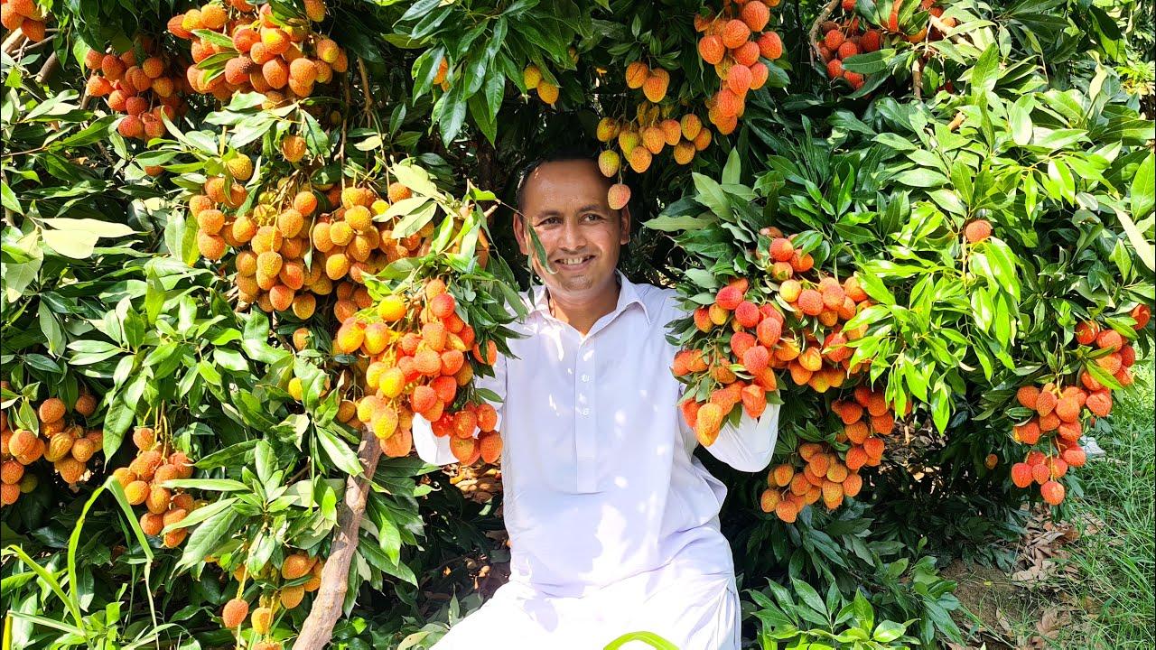 Lychee Juice | Litchi Juice Recipe | Litchi Fruit Juice | Mubashir Saddique | Village Food Secrets