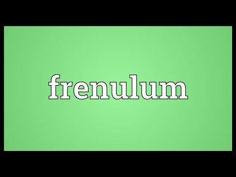 Header of frenulum