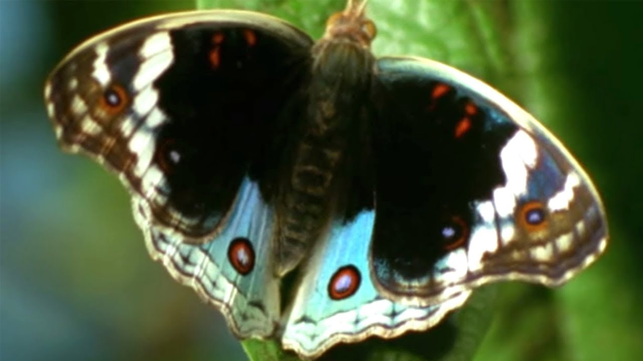 Facts About Butterflies  - Secret Nature