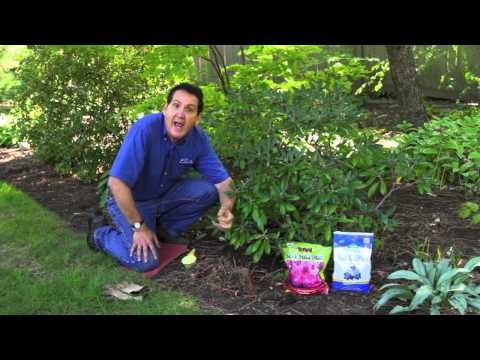 How To and When To Add Soil Acidifier