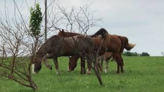 roadside horsey watch mama with new baby being protected by two males