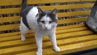 Cute cat on the bench