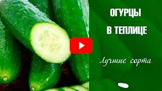 видео Лучшие сорта огурцов для теплиц на Урале