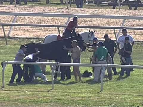 Tampa Bay Downs Horse In Pond 2.  Front Angle.