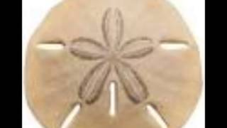 Watch Stavesacre Sand Dollar video