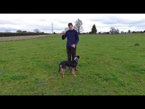 Dog Training - How to use a longline