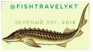 FISHTRAVELYKT - Вытащили старую сеть на Зелёном лугу с осетром!!!