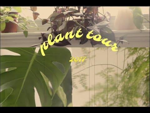plant tour part 1 ⋆ kate hall