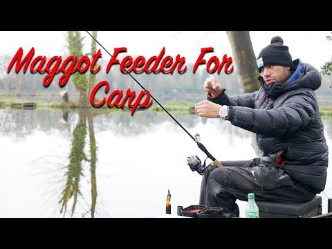 Maggot Feeder Fishing For Carp