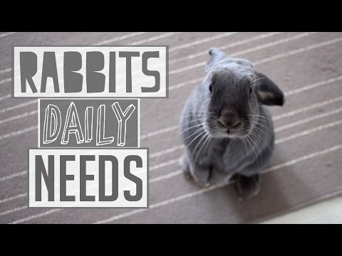 A Rabbits Daily Needs