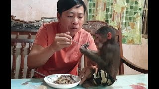 Baby Monkey | Monkey Doo Has Breakfast With Corn Sticky Rice With Black Bean