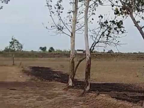 Agricultural land for sale in  Near Chennai  |  Low Budget Farm land for sale
