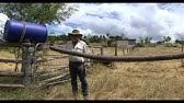Cattle Oiler - YouTube
