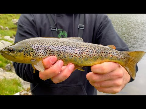 Lake District Fishing - BIGGEST Tarn Trout So Far