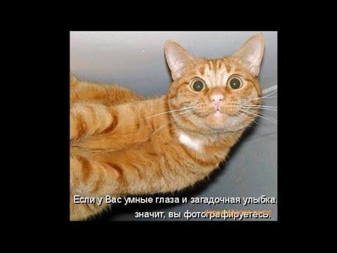 Фотоприколы про животных (32 фото)