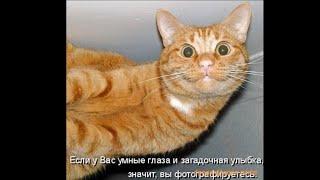 Приколы ! смешные фото животных !