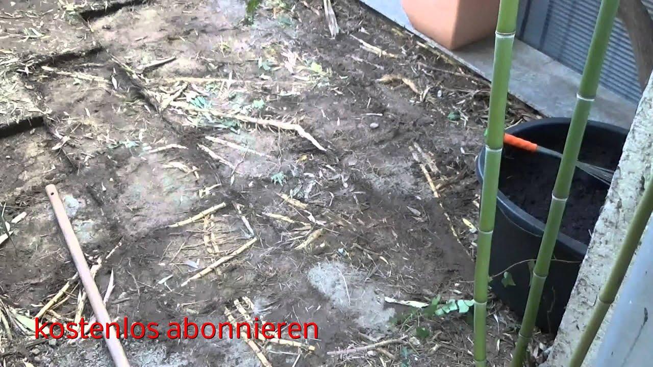 Bambus Bamboo Und Die Katastrophalen Folgen Youtube